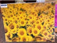 BRAND NEW - ATHENA SUNFLOWER ART PRINT... PHOTO, PICTURE with card support
