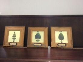 3 lovely shabby chic style Topiary pictures in rustic wooden frames