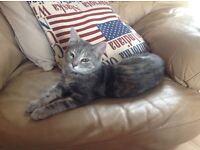 Missing kitten
