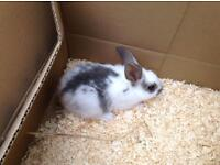 Adorable young rabbit for sale
