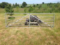 Field gate, 12ft, Galvanised