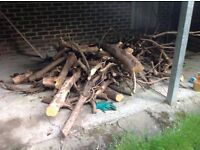 Large pile of rhododendron logs for fire wood free