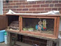 Guinea pig , hutch and accessories for sale .