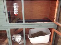 For sale 2 rabbits and house