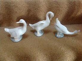 NAO swans