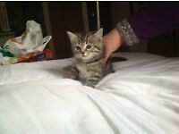 Two kittens £80 each