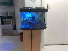 Stunning fish tank