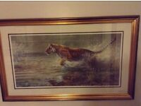 This is an ammazing gold framed picture of genghis the tiger in the throws of chasing his prey ,