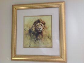 Framed David Shepherd Lion print