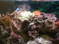 Marine reef tank corals and live rock matured 6 years plus