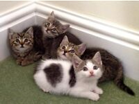 4 georgous kittens for sale - 1 now sold