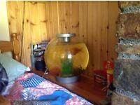 Goldfish and 30litre globe
