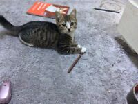 3 Gorgeous kittens for sale