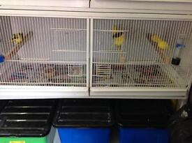 Cock and Hen canaries now in, all sexed