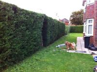 GARDEN MAINTENANCE! NEED YOUR HEDGES and GRASS CUT??