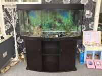 4ft bow fronted fish tank on stand