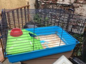 Indoor guinea pig/ rabbit cage.