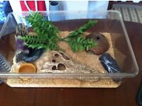 Small Starter vivarium for snake/reptile, set up and ready to go!