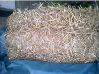 15 bales of straw excellent condition.