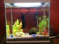 Aqua Expert 27 litre fish tank with light, filter, heater and accessories.