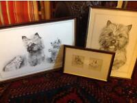 Set of 3 Cairn terrier prints