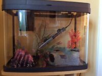 Love fish tropical fish tank 40l with additional arnaments