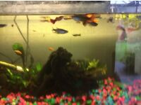 Tropical fish for sale as changing tank