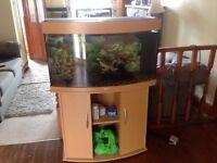 3ft juwel bow front fish tank
