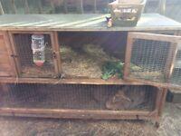 5ft rabbit hutch