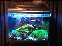 Fish tank 120 litters £100