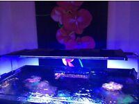 Marine led lights,skimmer,tmc 900 aquarium lights salt water