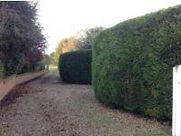 Westwood garden services