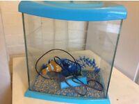 Small colourful fish tank