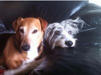 Dog Boarding work wanted....Chingford Epping Forest area