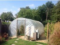 Polytunnel 10ft X 20ft in very good condition