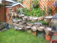 Used hanging baskets various sizes