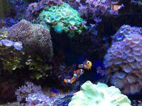 Contents of 100cmX40cmX40cm Reef Aquarium.