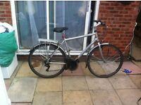 Pioneer 1 Raleigh adult bike