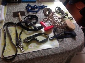 Dog items leads ect