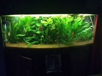 Vision 450 ,fluval fx6 , c02 system , all under 4years old ,possibly one scratch in the glass