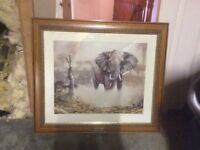 Framed picture of elephants by David hodge