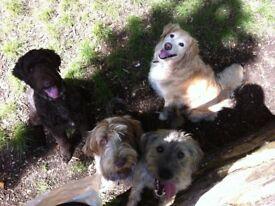 Country Dog Club Dog Walking Service in King's Lynn