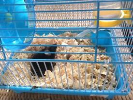 FREE. little black mouse for sale, 3 days ago i paid £16 for cage, food, straw and mouse