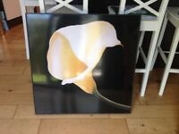 Large floral print from NEXT 81cm x 81cm