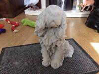 Concrete garden King Charles dog ornament