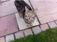 Missing young tabby cat called Frankie last seen in Dean Road Bitterne