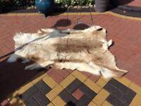 Stylish Reindeer pelt/rug