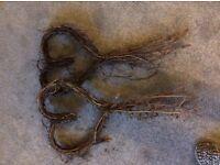 2 willow heart garlands
