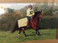 15.3hh bay mare FOR FULL LOAN