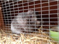 Rabbit and hutch - free to good home